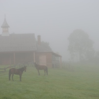 Two horses in front of stables, shrouded in fog.
