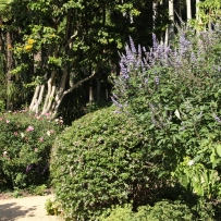 Vaucluse House summer shrubbery 2 and Vitex