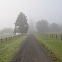 Driveway between fences, with fog-shrouded trees in distance.