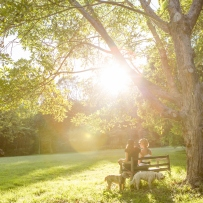 Two people sitting on backlit bench under tree with dogs.