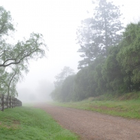 Road shrouded in fog with trees.