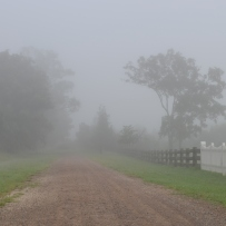 Foggy road with fence and trees.