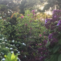 the many colours of the pleasure garden, purple, white, orange and green.
