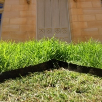 Close up of Mowvember grass moustace, Vaucluse House