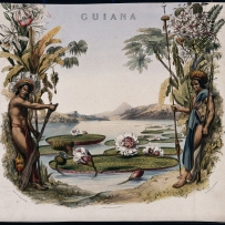 Coloured lithographic reproduction of an engraving by M. Gauci, c. 1814, after C. Bentley. Shows two men either side of the giant Victoria amazonica lily