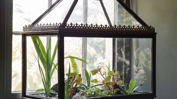 Glass Wardian Case at Vaucluse House , used to transport and display plants and ferns