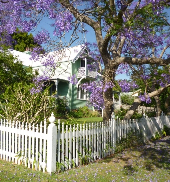A jacaranda in flower in the garden at Meroogal