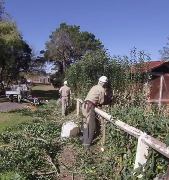 View along fence with two people wearing PPE working on half-trimmed hedge with shed and ute in background.