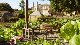 Image of the kitchen garden. A pitchfork is centre frame with some freshly picked veges.