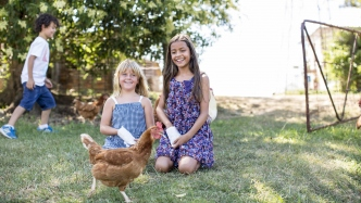 Two girls feed a chicken while a young boy runs in the background.