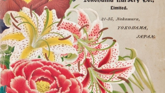 Picture from the Yokohama Nursery Company