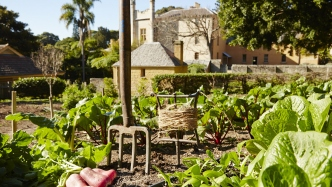 Lettuces and a pitchfork in a kitchen garden, overlooked by Vaucluse House