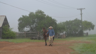 Man walking brown horse up red dirt driveway.