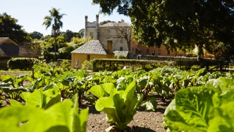 View looking over the kitchen garden at Vaucluse house on a sunny day with clear skies. In the foreground are rows of plants arranged very neatly and the house can be seen in the background.