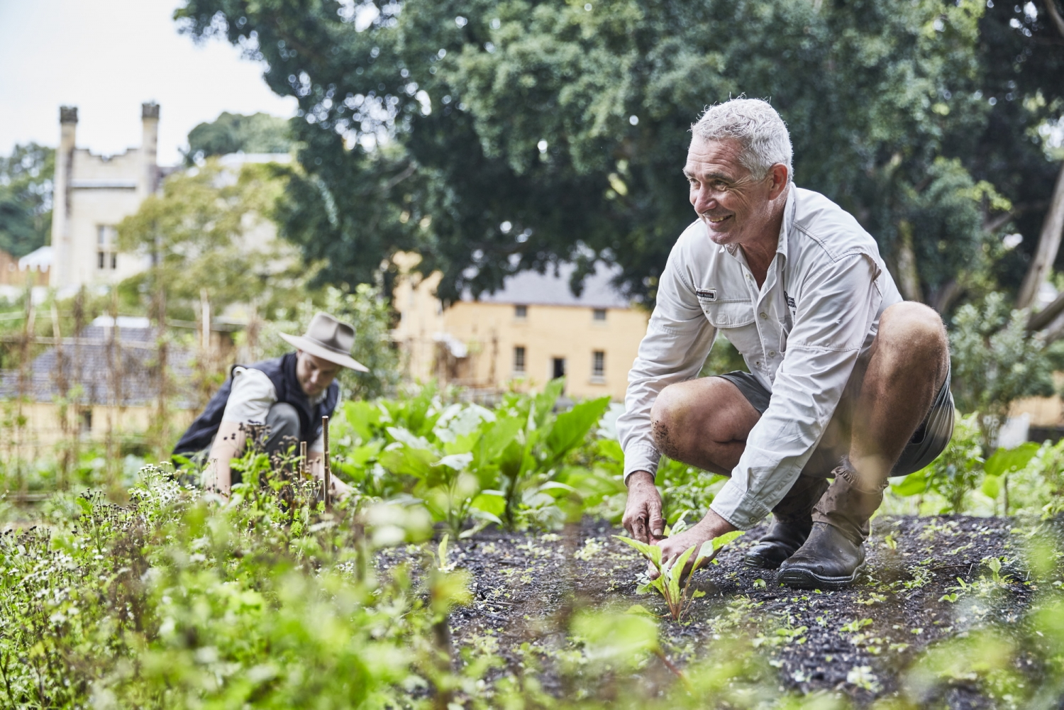 Horticulturists weeding in the Vaucluse House Kitchen Garden