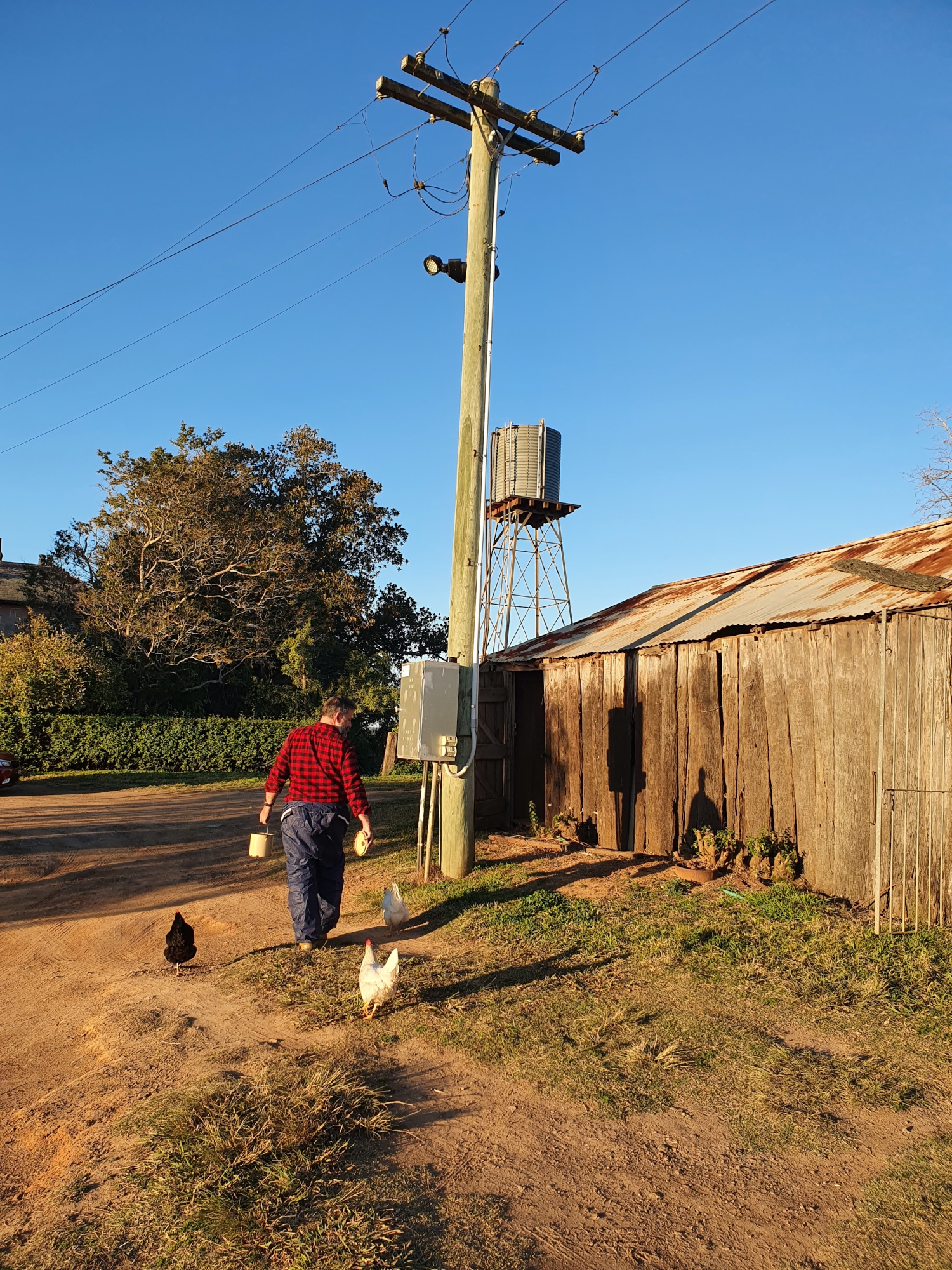 Man wearing half hazmat suit and red checked shirt leading chickens around side of rustic shed.