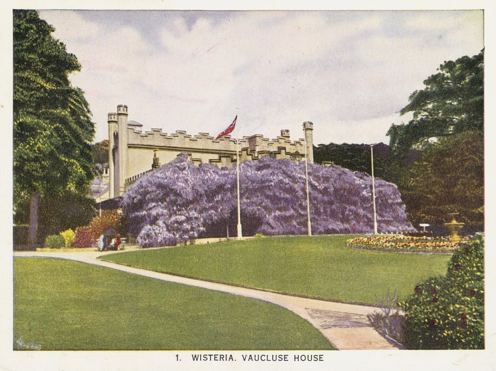 Brightly coloured photomechanical print of a stone house covered in purple wisteria
