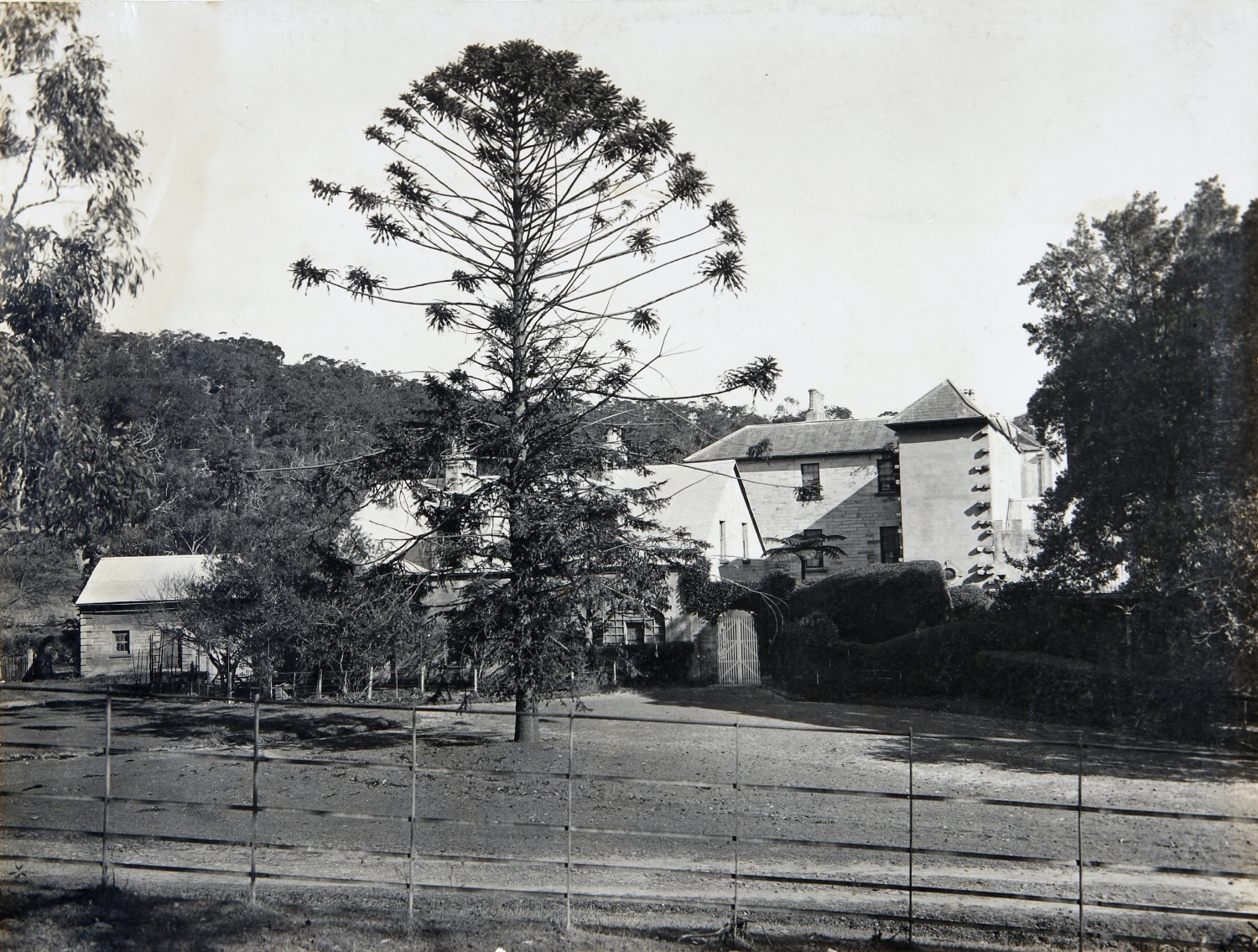 Black and white image of house from side with large pine tree in foreground.