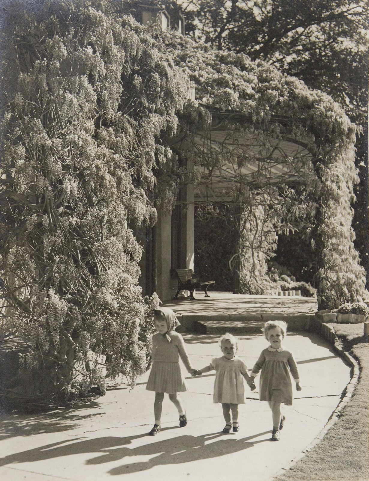 Black and white photograph of three small children walking hand in hand beneath wisteria