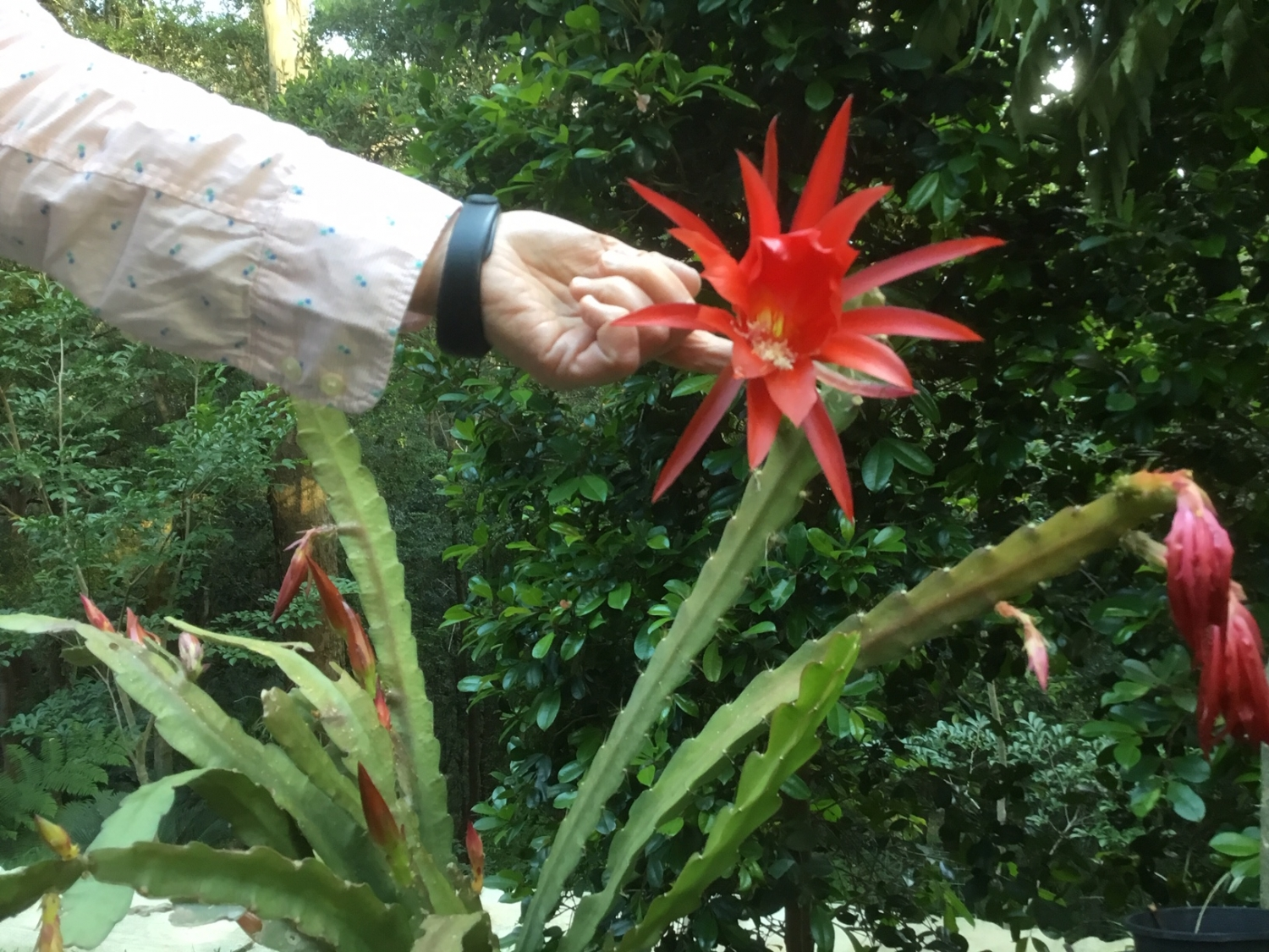 Arm extended with hand holding red spiky flower head.