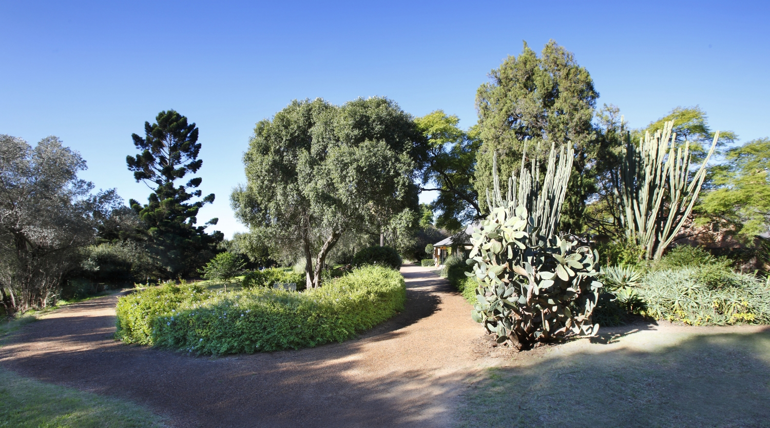 Colour photograph of a curving gravel driveway with cactus garden, shrubs and trees, with glimpses of the house visible through the foliage.