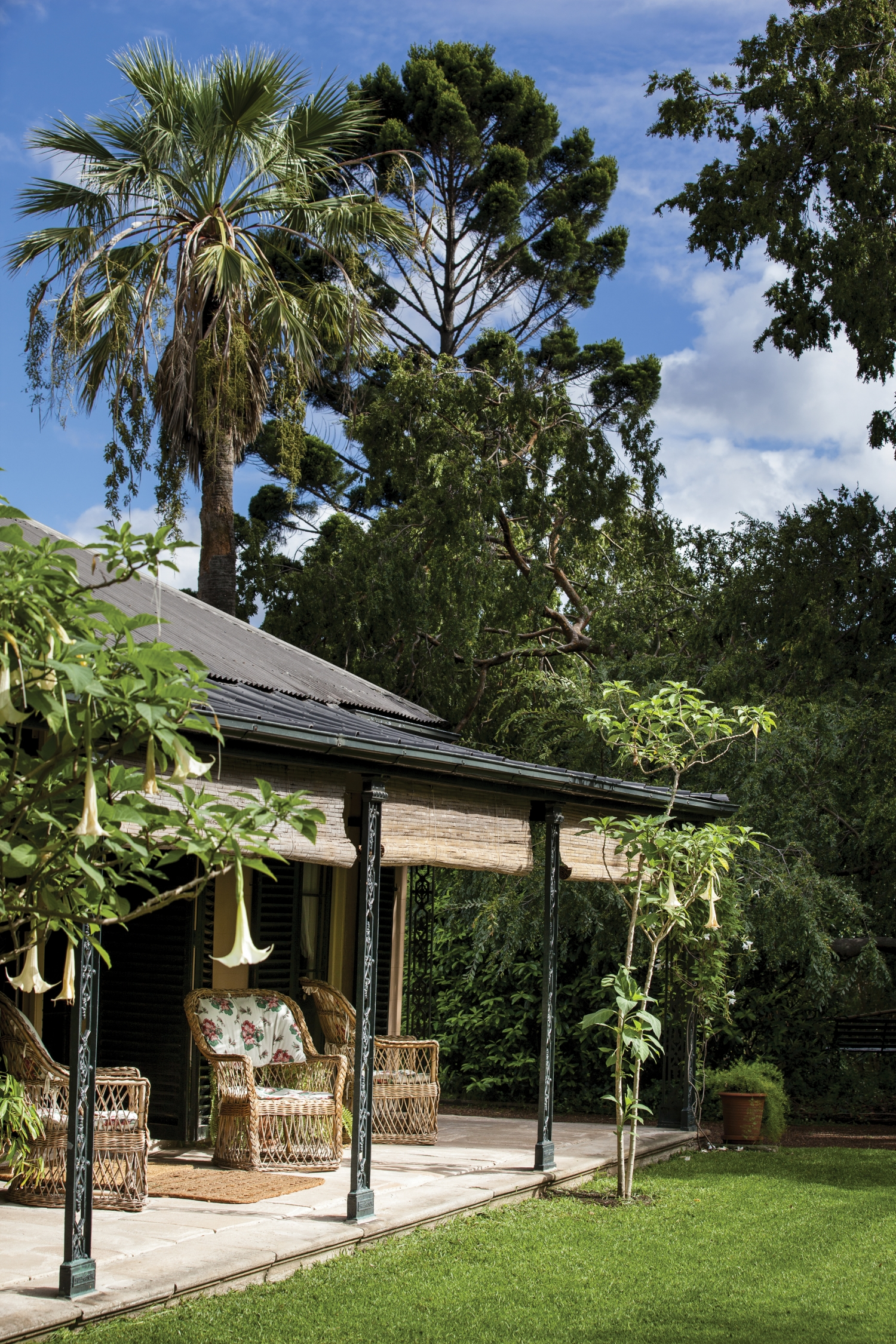 Portrait view of part of verandah with palm and other trees behind.