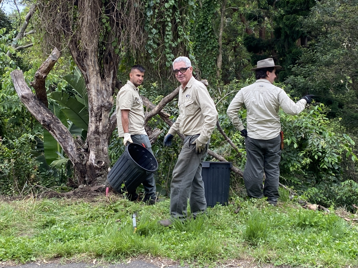 Three Horticulture members stand infront of the bush curtilage at Vaucluse house. they are filling bins with weeds.