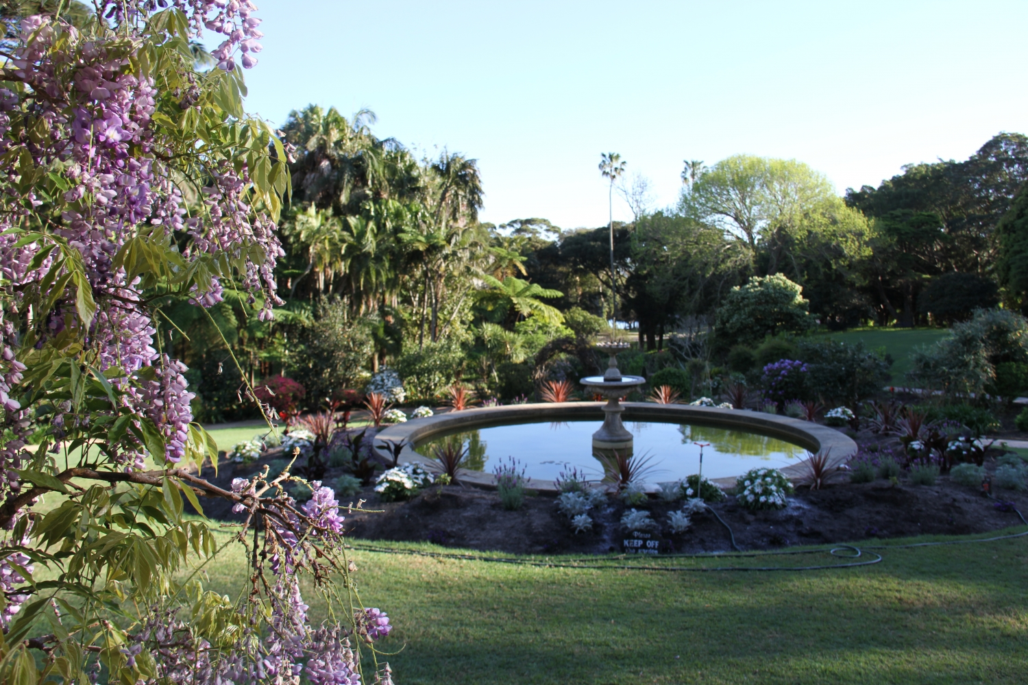 Photograph of wisteria with fountain and garden