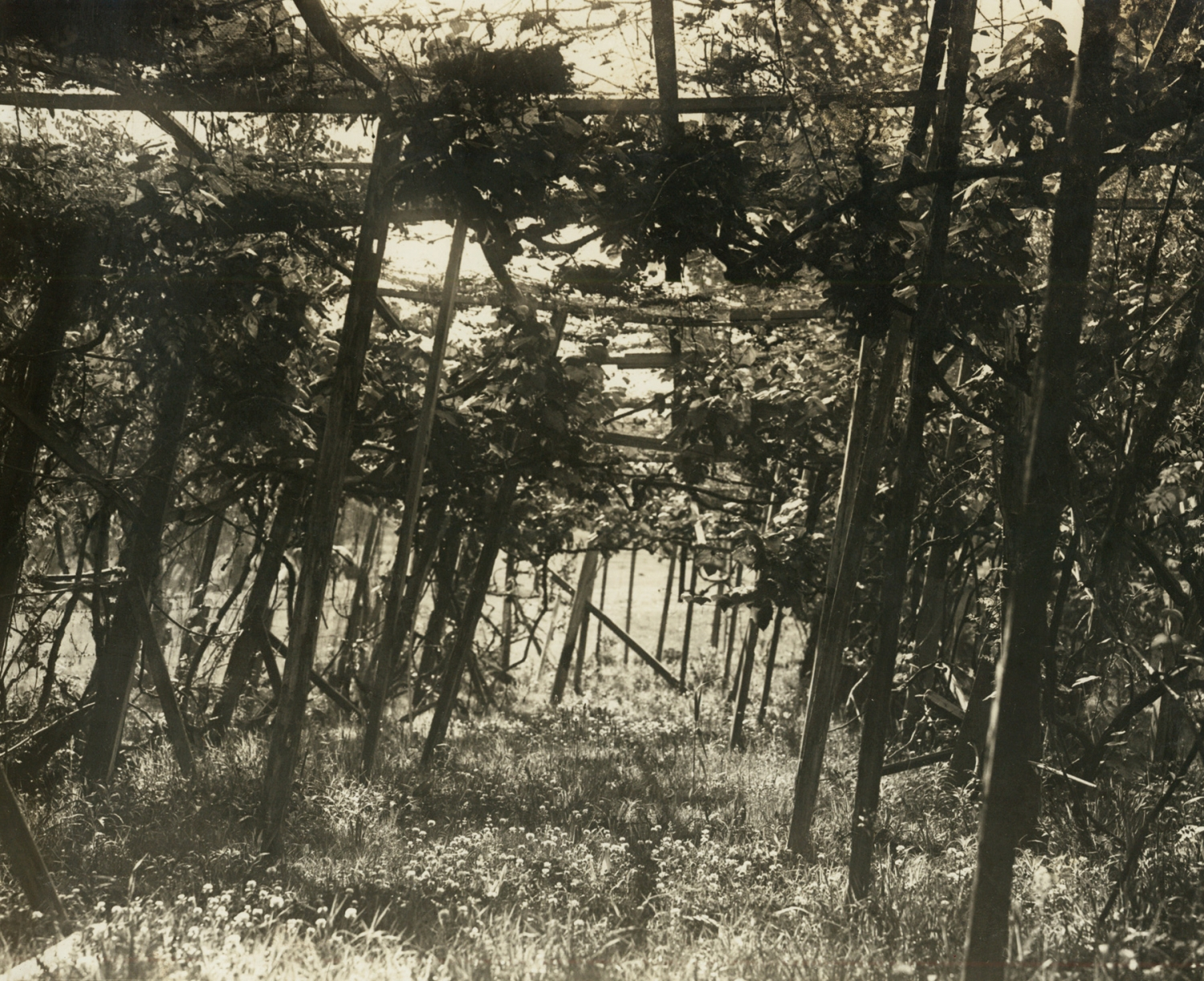 Black and white photograph of a rustic pergola