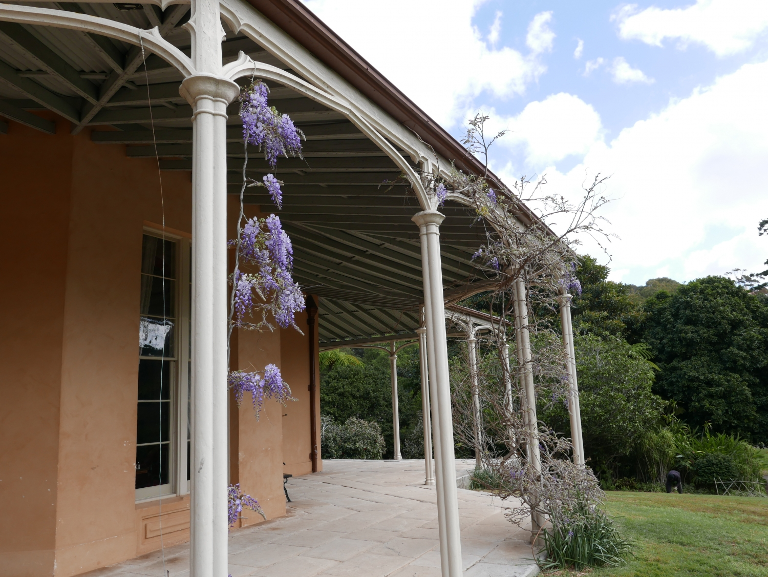 The verandah at Vaucluse House with the first Wisteria blooms