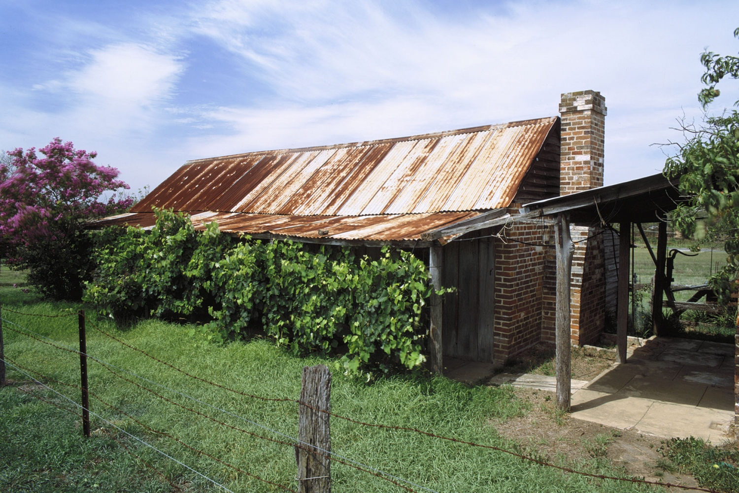 Rusty roofed farm building with green vine growing on front verandah posts.