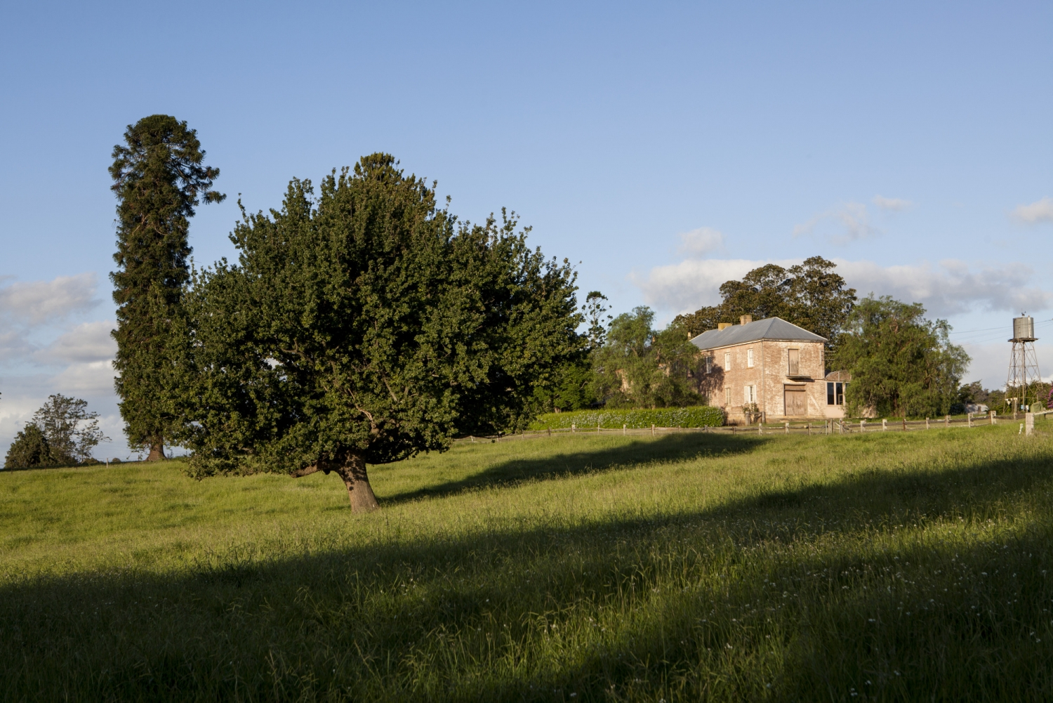 Bunya Pine and Oak trees amongst a green paddock at Rouse Hill House and Fram