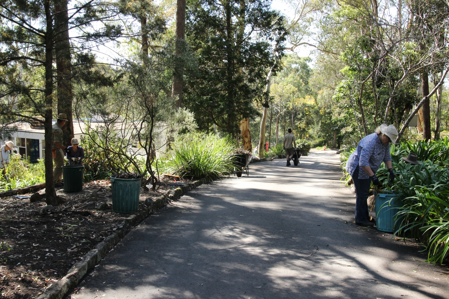 Staff and volunteers at the Rose Seidler House working bee focusing on the driveway edges