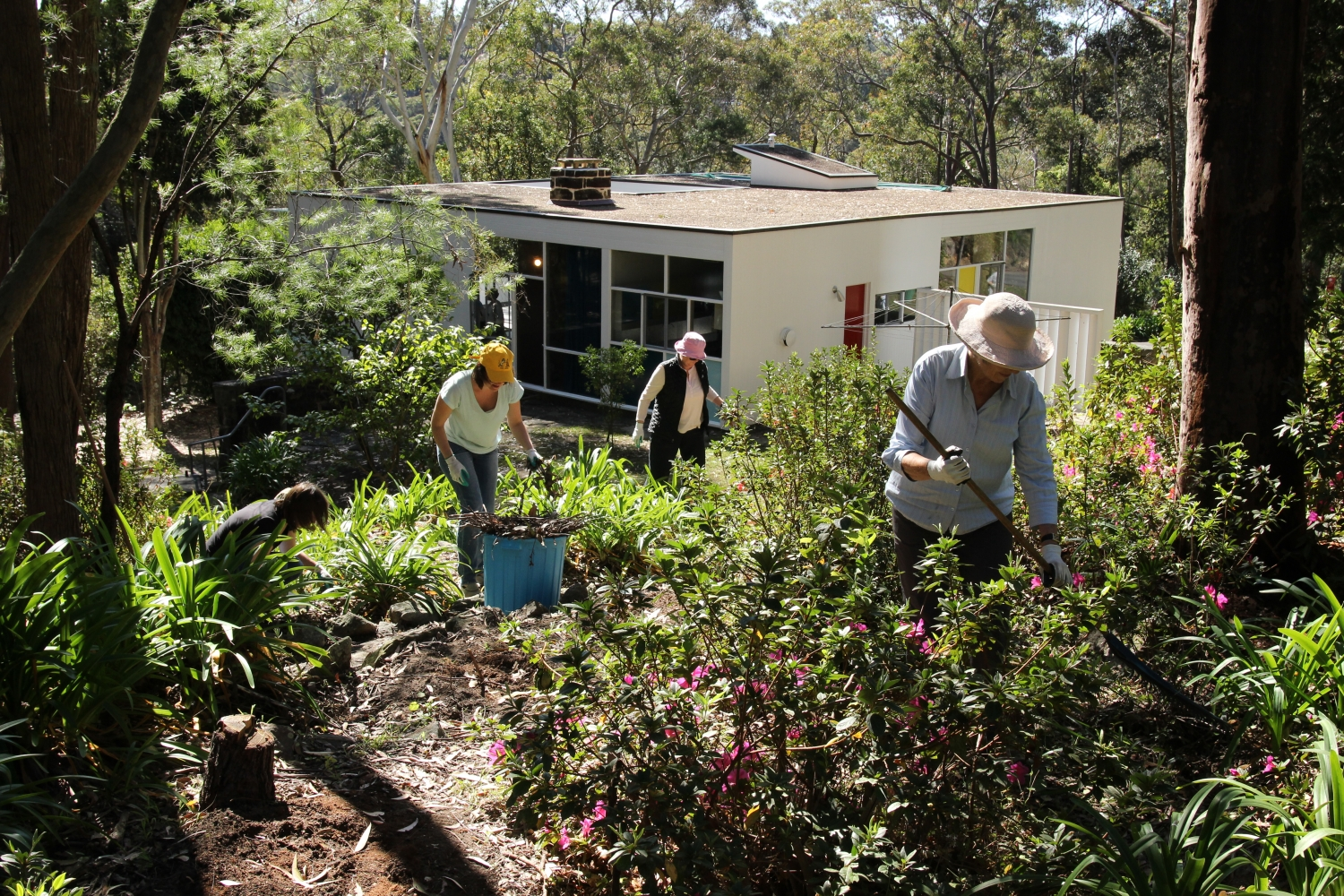 A dedicated group of staff and volunteers help out in the garden at the Rose Seidler House working bee
