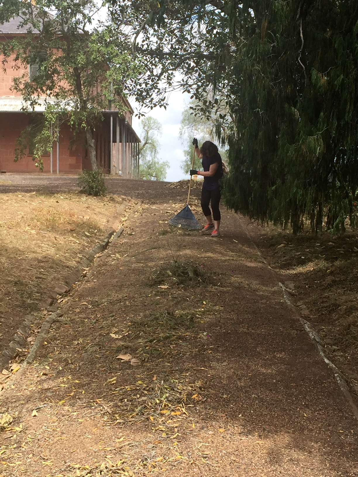 Raking the garden paths during the Rouse Hill House and Farm working bee
