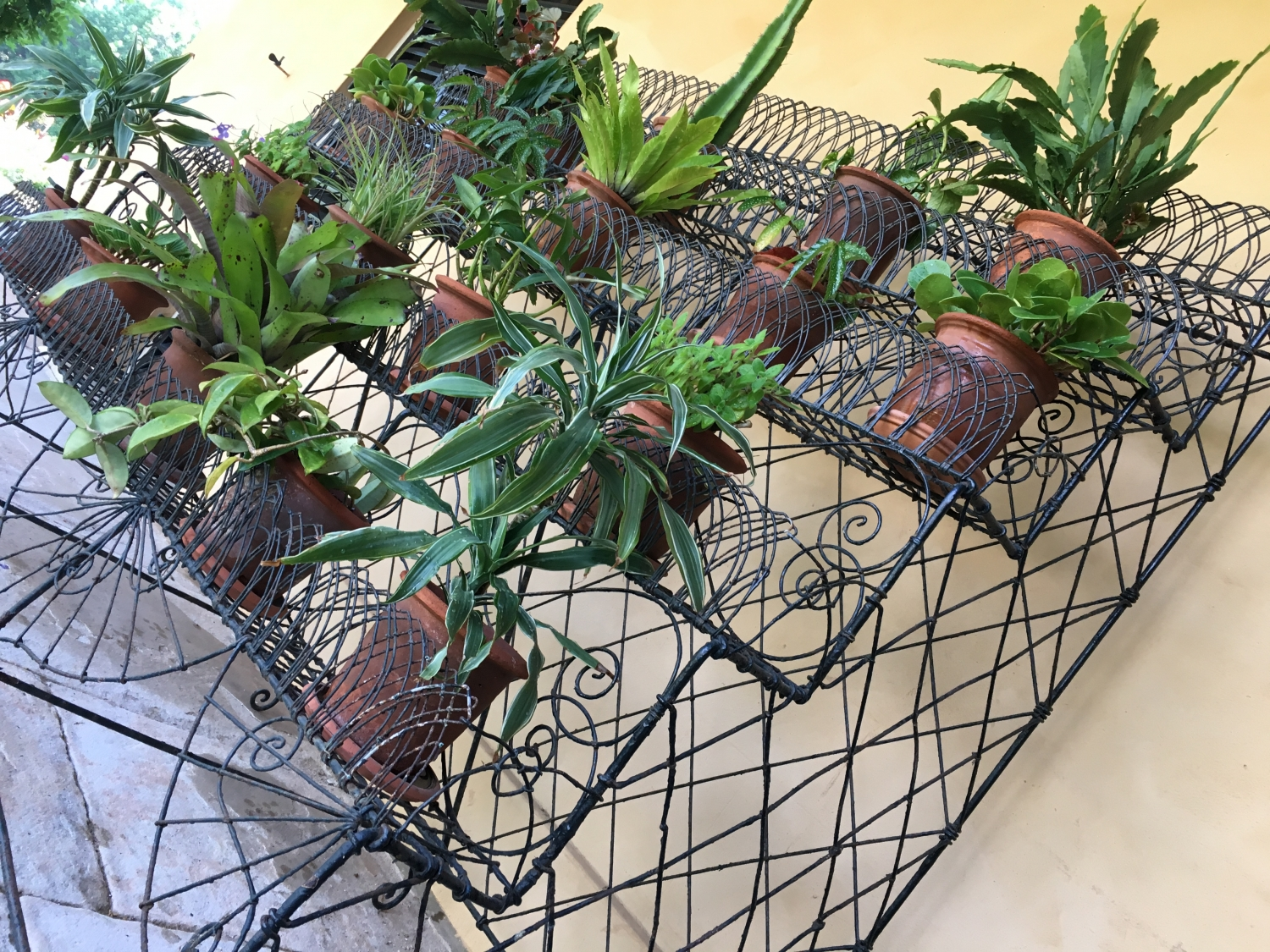 wire work plant stand located on the Vaucluse house verandah