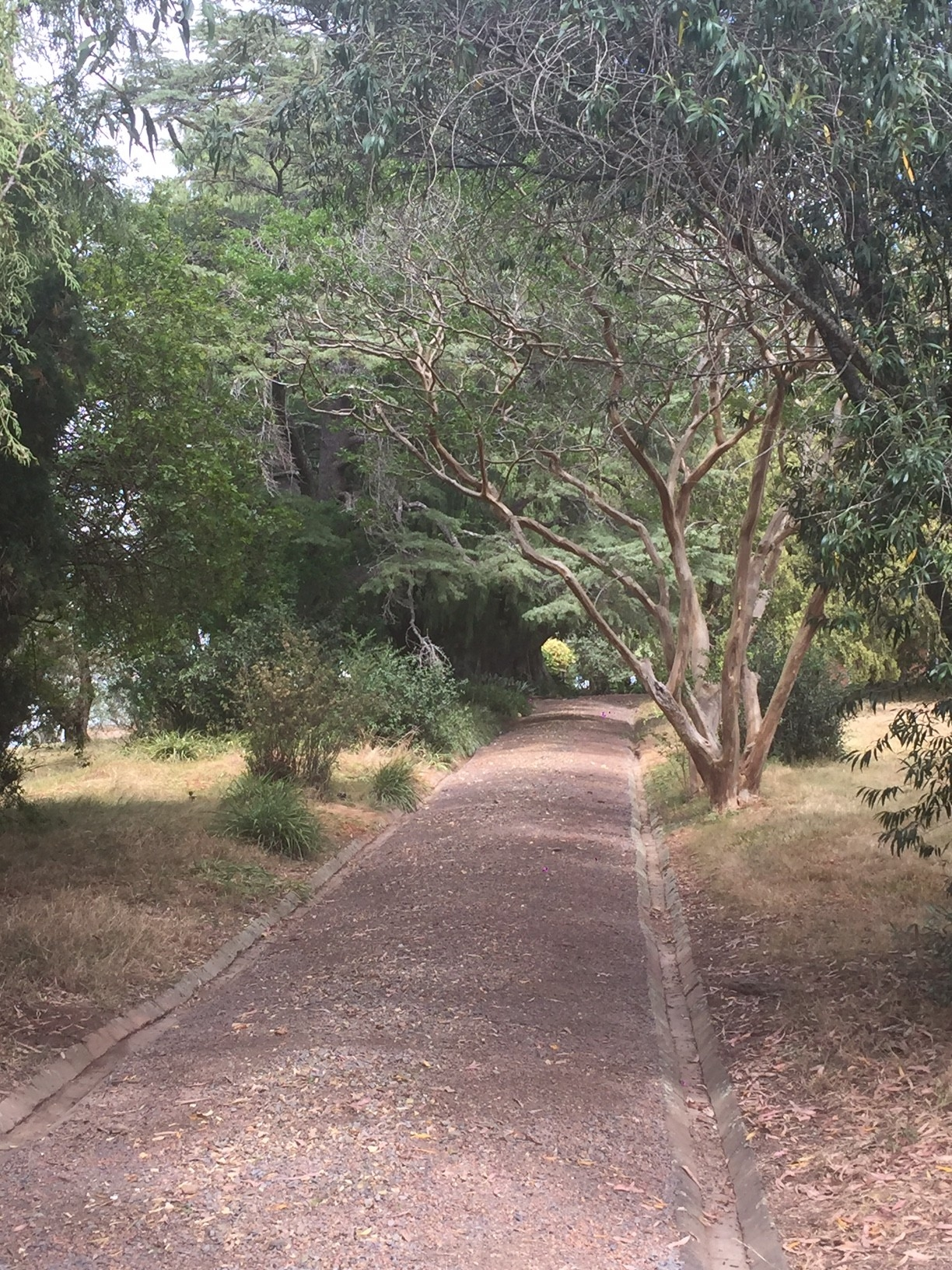 The garden paths at Rouse Hill House and Farm after raking