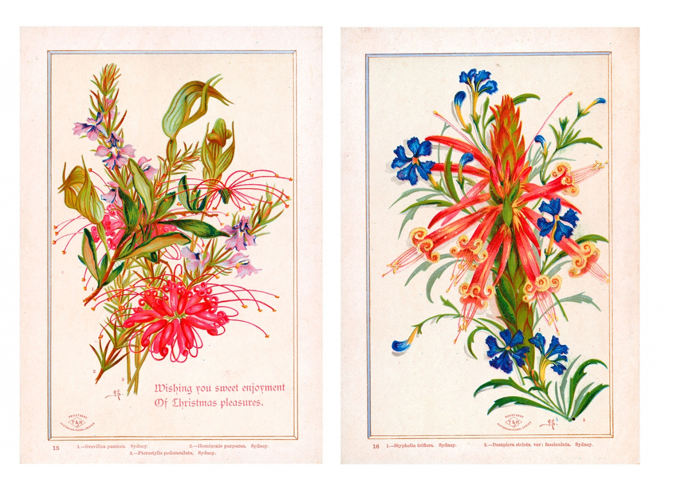 Composite image of two wildflower cards.