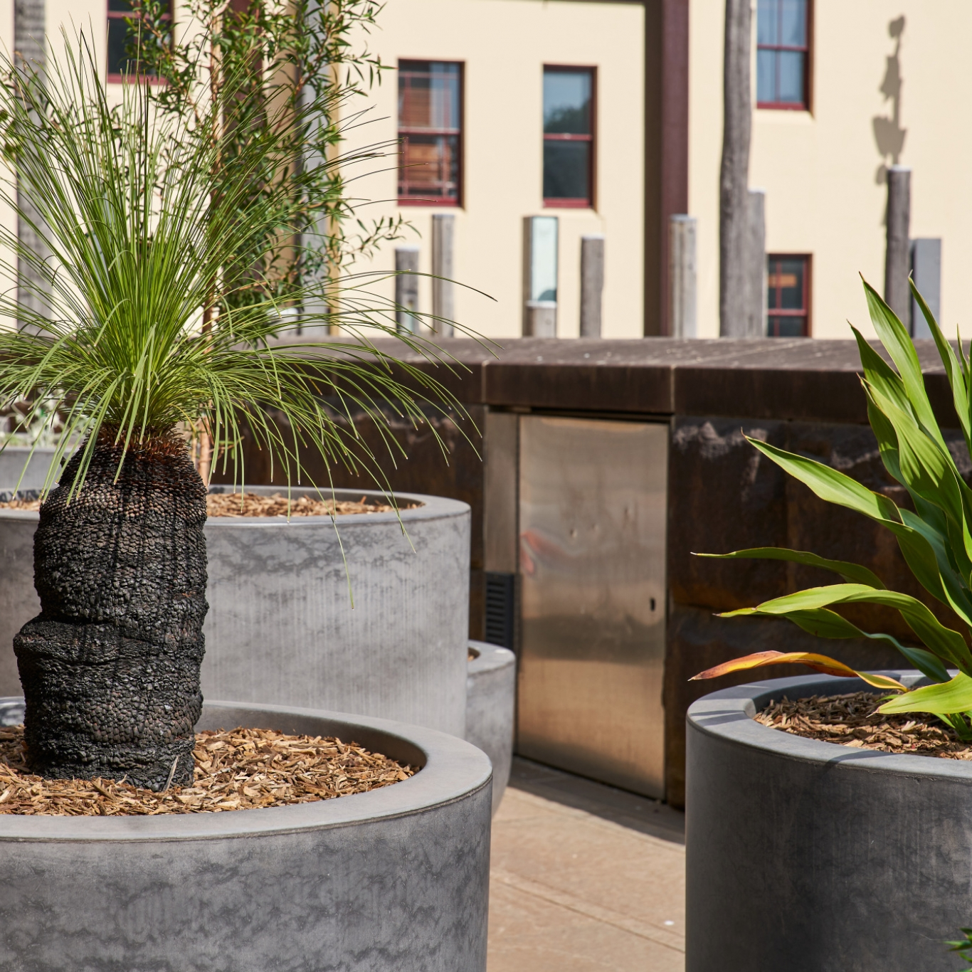 Native plants in containers on rooftop.