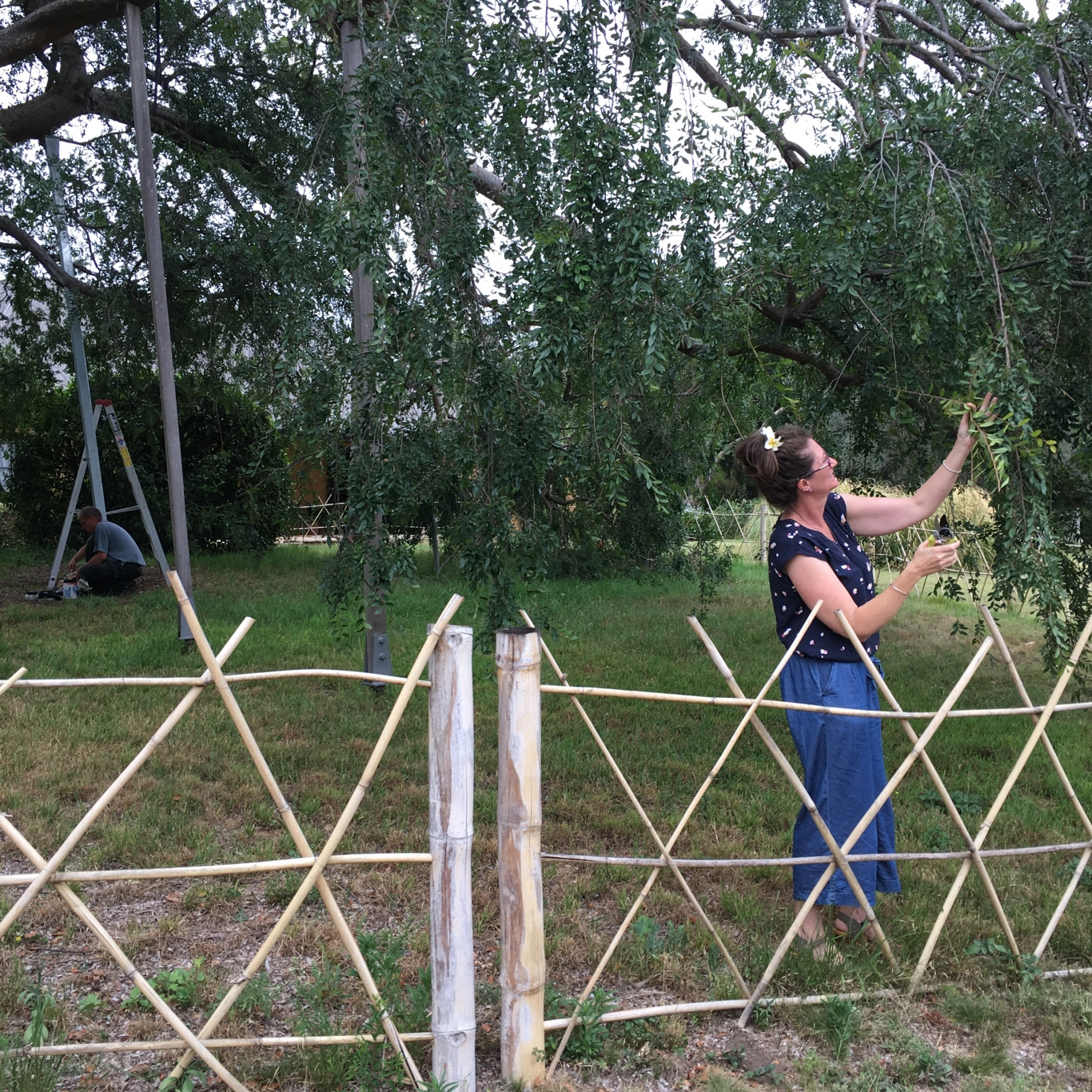 Woman behind cross-hatched bamboo fence cutting foliage
