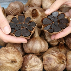 Hands holding cloves of black garlic.
