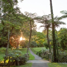 The sun shines through the trees and down the garden path at Vaucluse House.