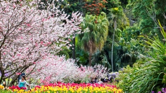 Colour photograph of the Royal Botanic Garden, Sydney during spring.