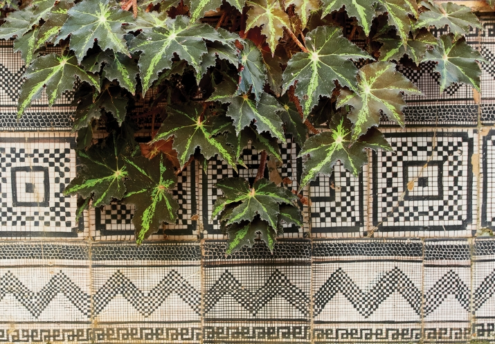 Plants with intricately tiled floor.