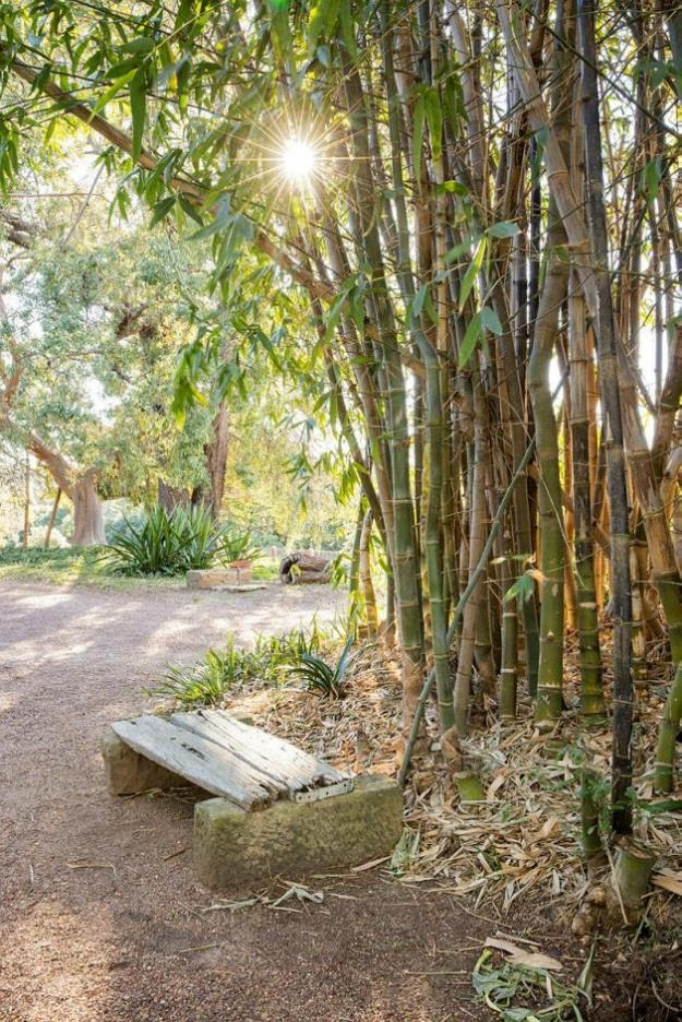 the bamboo at Elizabeth which has a timber seat in the foreground and a gravel drive sweeping off towards the house.