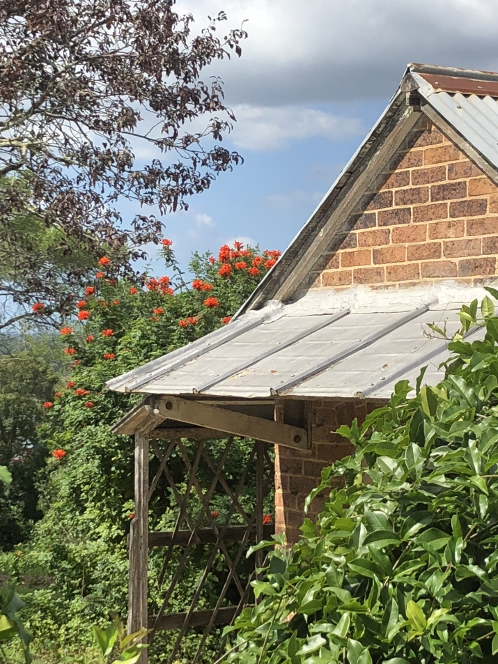 the bright orange-red flowers of the Tecoma appear over the top of the Bath House building at Rouse Hill House and Farm with contrasting foliage from the plum