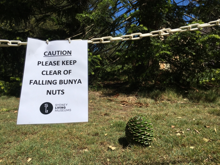 Signage we placed around the Bunya Tree to stop people from entering the drop zone at Vaucluse house.