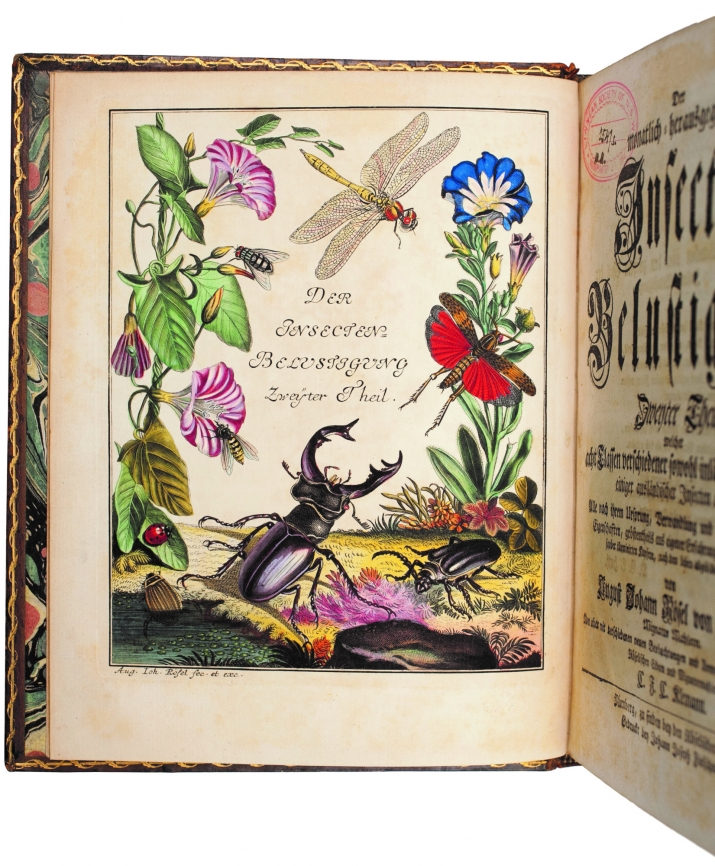 Coloufully illustrated page in book showing beetle and various other insects with flowers.