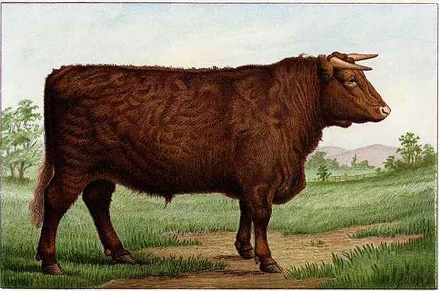 An illustration of a bull.