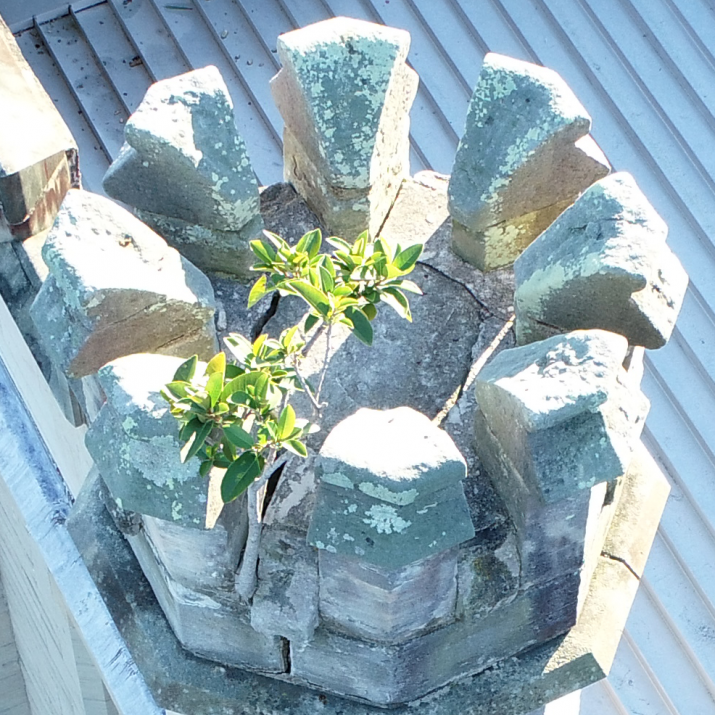 Looking down onto top of turret from above, with plant growing in stonework.